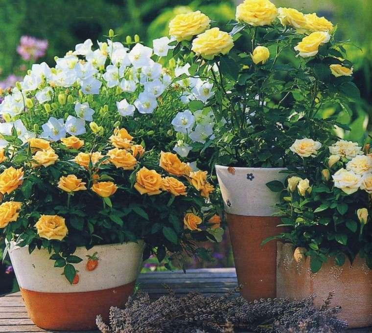 flores bonitas rosas pequenas amarillas ideas modernas