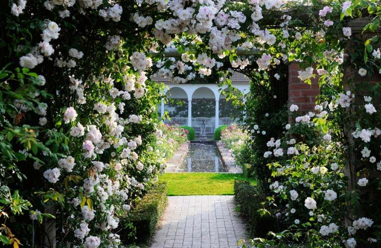 flores bonitas trepadoras pergola tunel camino casa ideas