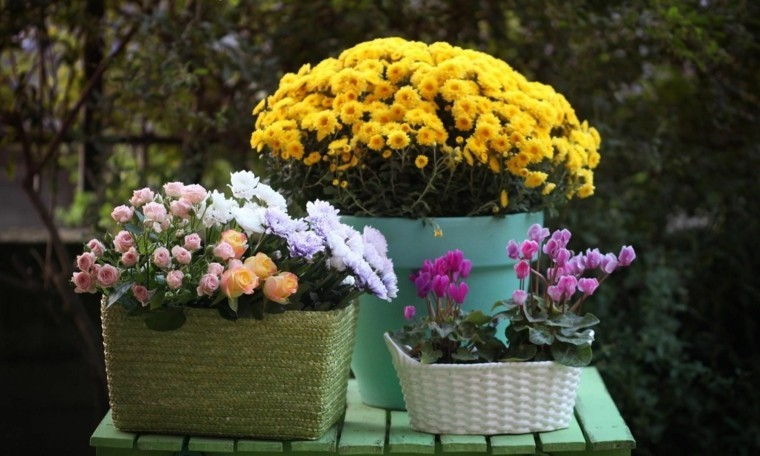 flores amarillas cestos distintos ideas jardin