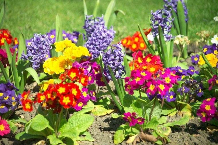 flores contraste colores jardin especies