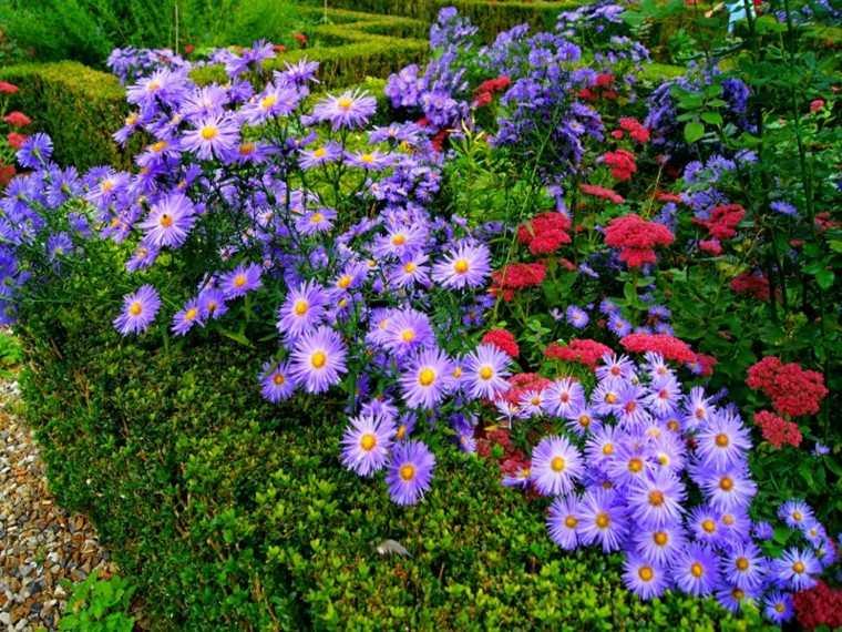 Flores bonitas que no deben faltar en el jard n for El jardin de vikera
