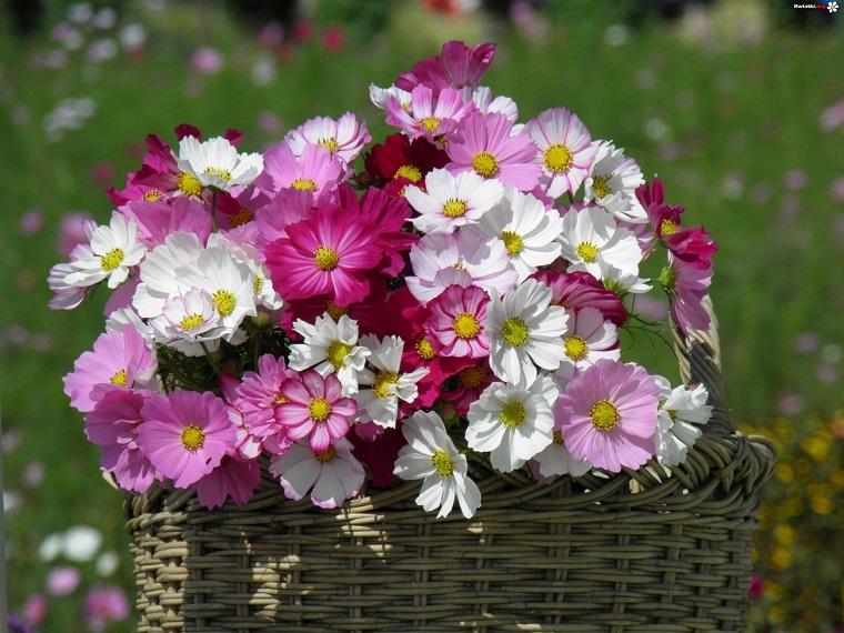 Flores bonitas que no deben faltar en el jardn