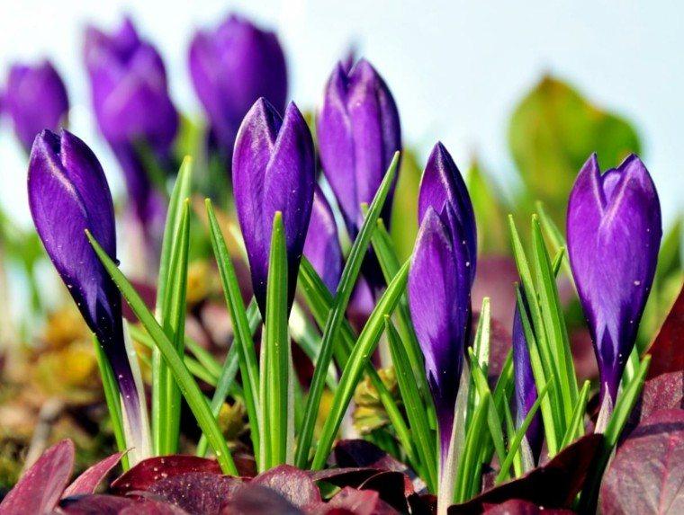 flores purpura ideas geniales decoracion jardin bonitas