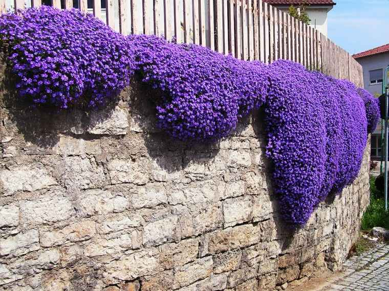 flores purpura trepadoras ideas jardin ideas