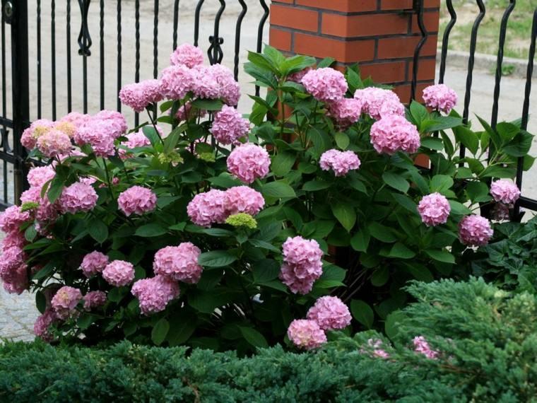 flores rosa camino entrada casa idea moderna
