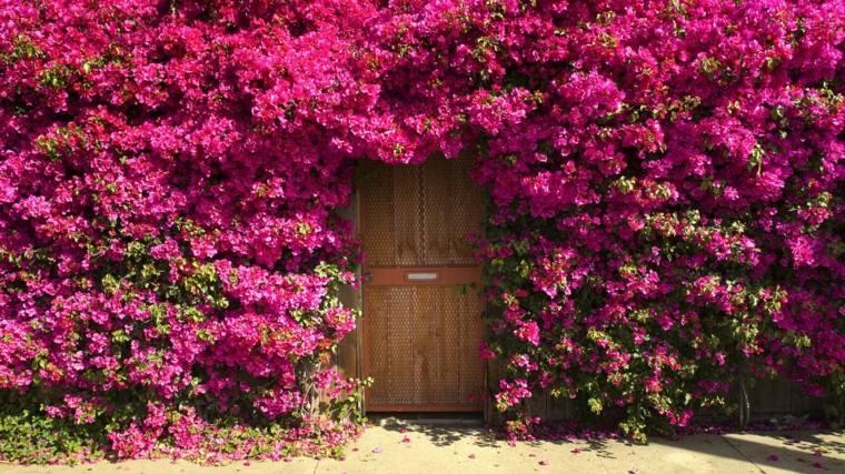 flores trepadoras puerta entrada rosa preciosa ideas