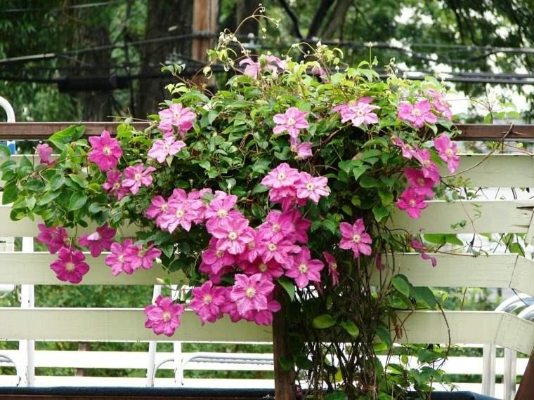 flores trepadoras rosa verde ideas bonitas jardin