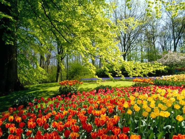 flores tulipan amarillo rojo iluminacion