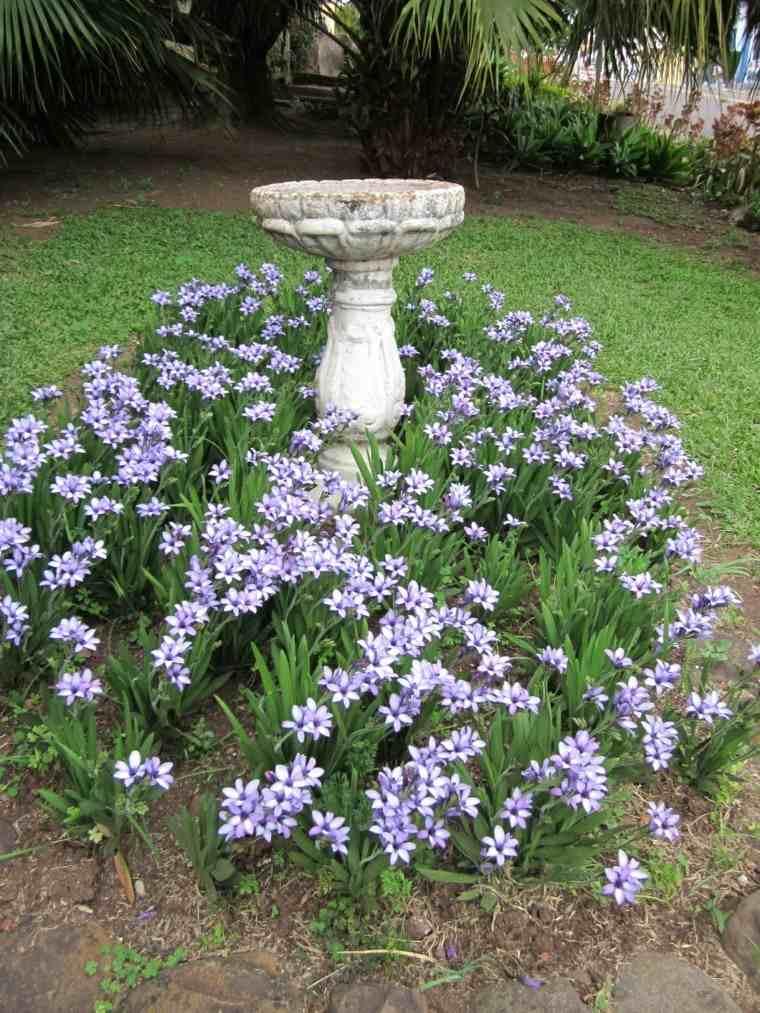 fuente jardin cesped rodeado flores ideas