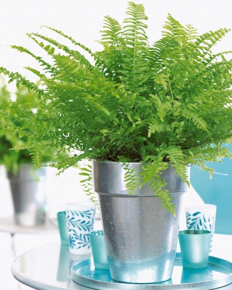 helecho plantas decoracion mesa centro
