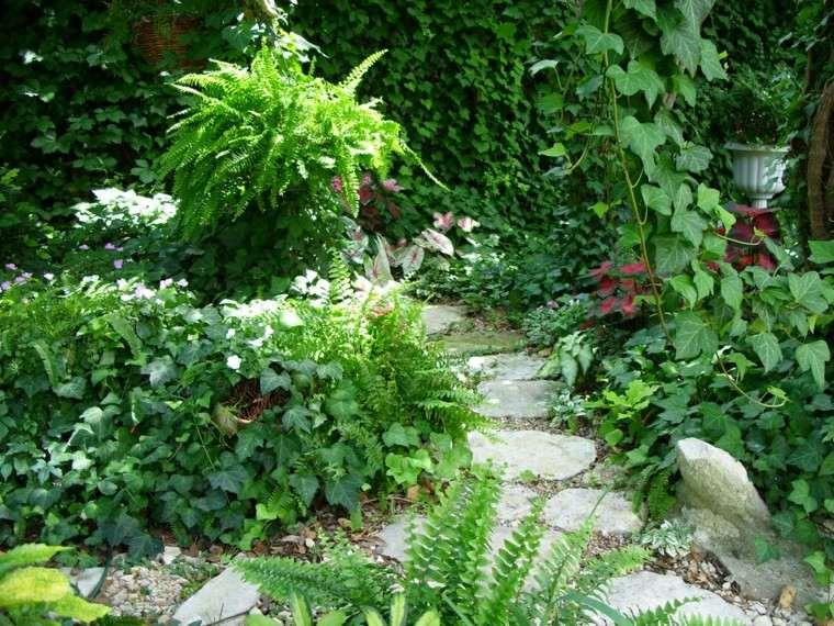 helechos camino macetas patio jardin