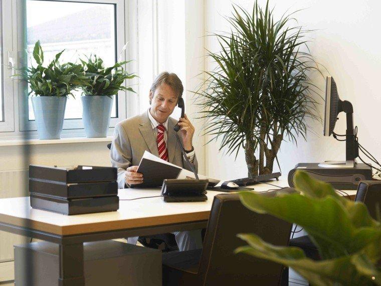 hombre telefono macetas plantas ventanas
