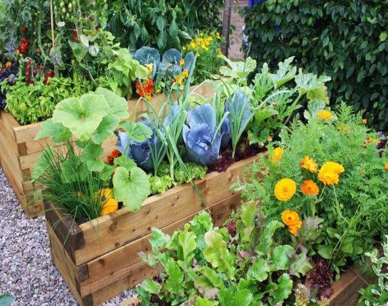 huerto jardín