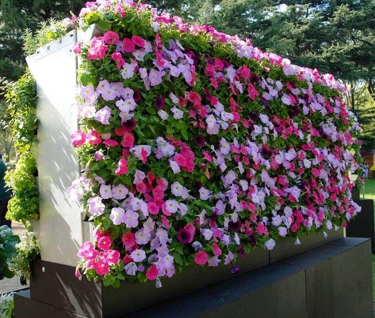 jardin vertical bonitas flores petunias