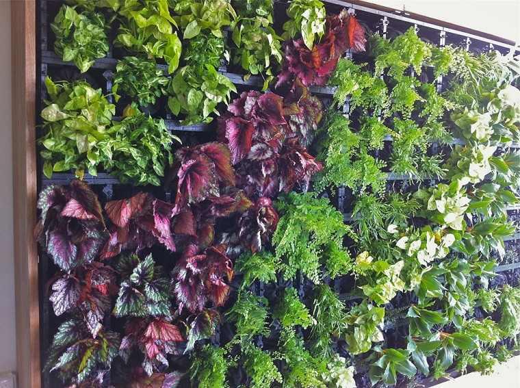 jardines verticales franja roja plantas