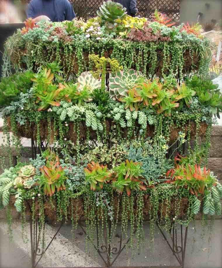 macetas jardin natural tres plantas suculentas ideas