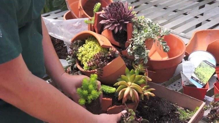 macetas rotas adornos plantas secano cubiertas