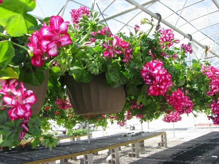 mundo natural casa jardin macetas colgantes ideas