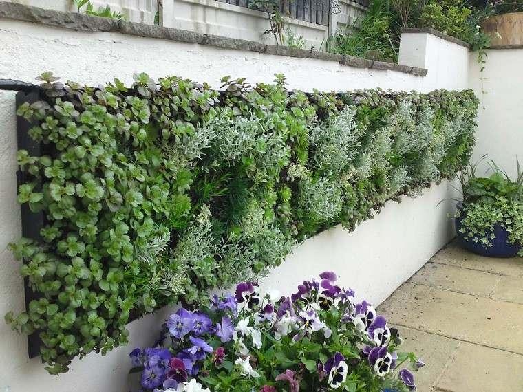 muro jardin violas flores colores