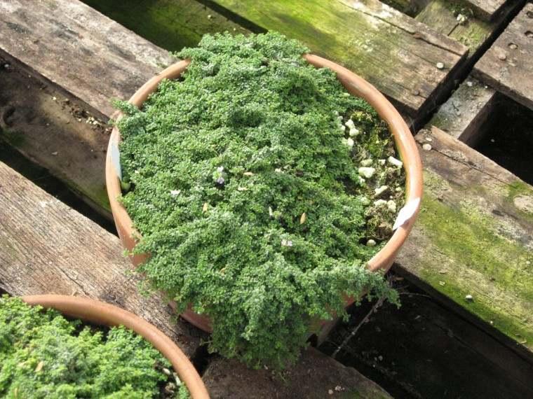 musgo planta maceta jardin decoracion