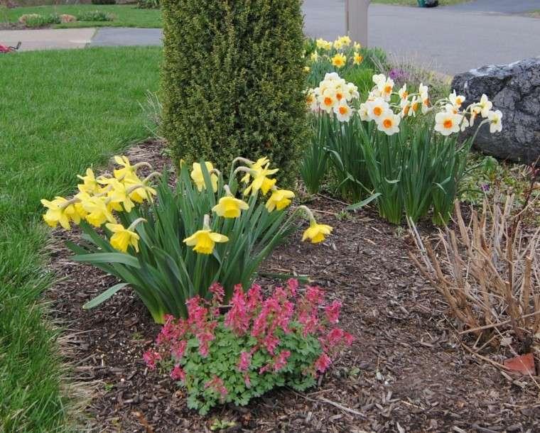 Plantas de jard n para una primavera a todo color for Plantas de hojas perennes para jardin