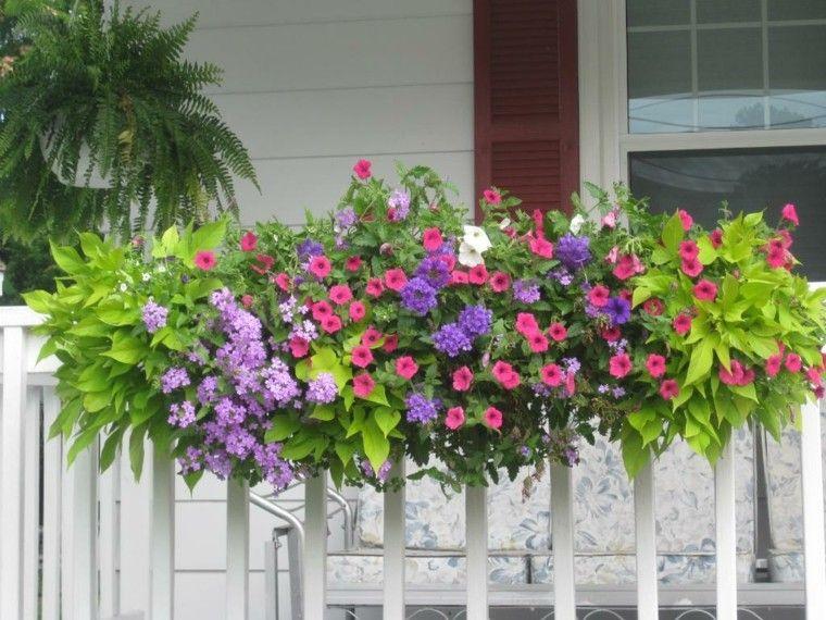 naturalidad balcon valla blanca ideas plantas preciosas