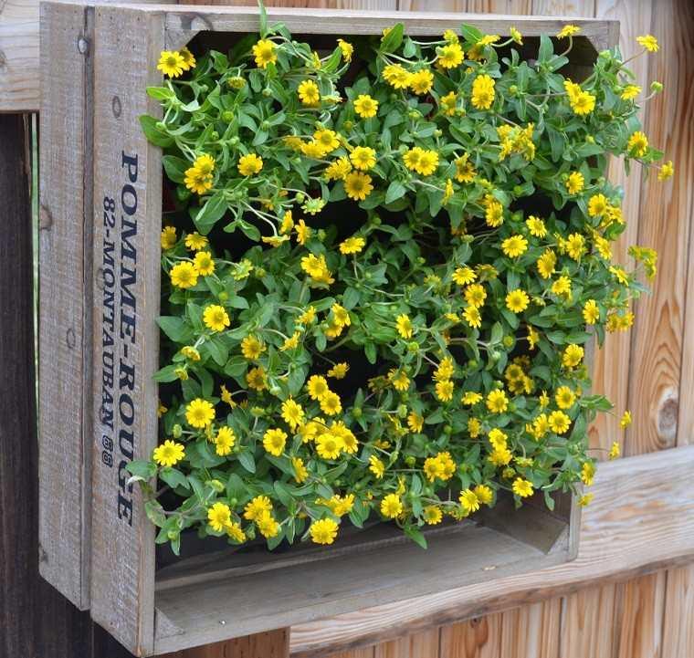 original jardinera muchas flores amarillas