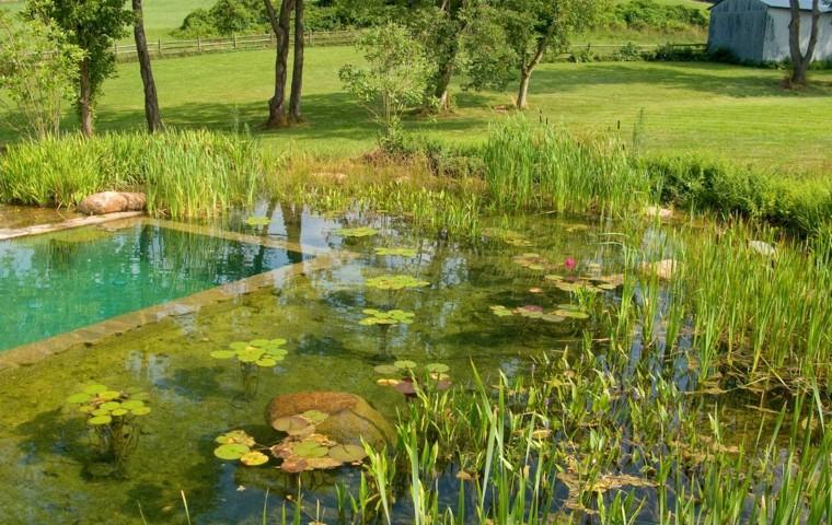 piscina campo lotus nenufares plantas