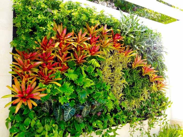 plantas colores jardin vertical pared