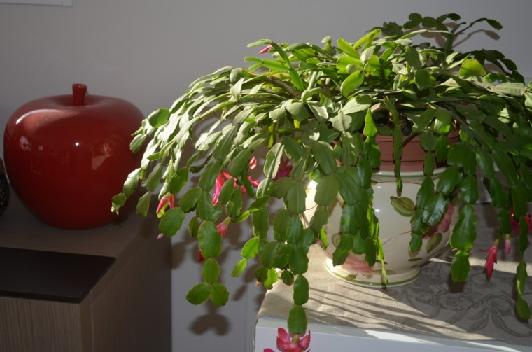 plantas interior maceta mueble mesa