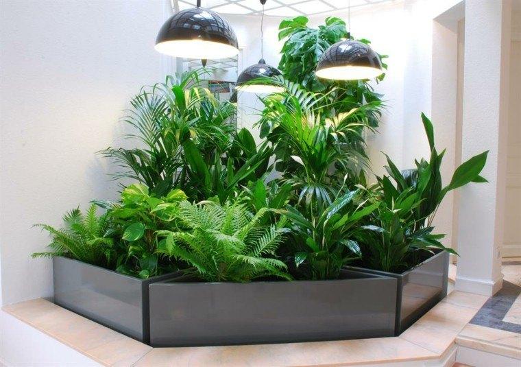 plantas palmas luces decoracion helechos