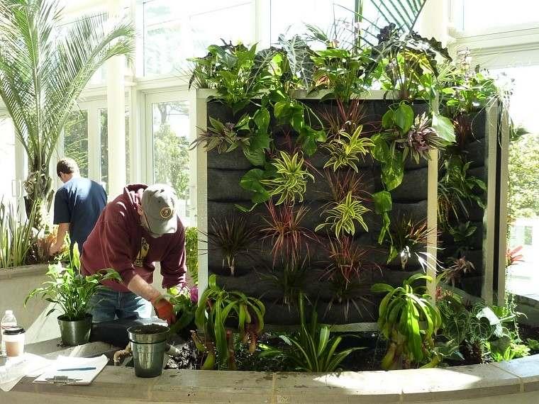 plantas pared muro maceteros verticales