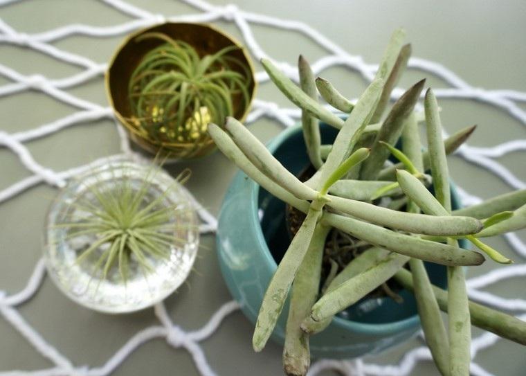 plantas variantes macrame diy suculentas