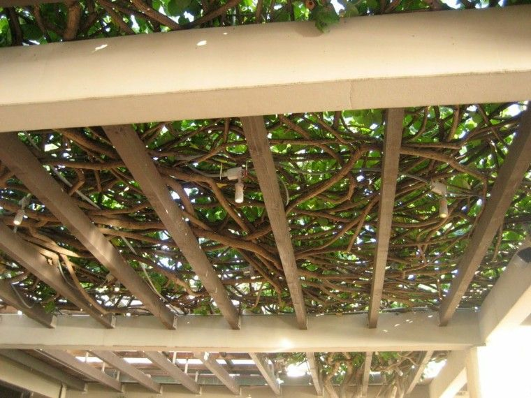 Pergolas jardin de madera una zona de recreo ideal - Pergola climbing plants under natures roof ...