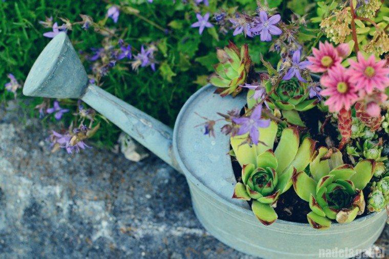 regadera vieja maceta jardinera plantas