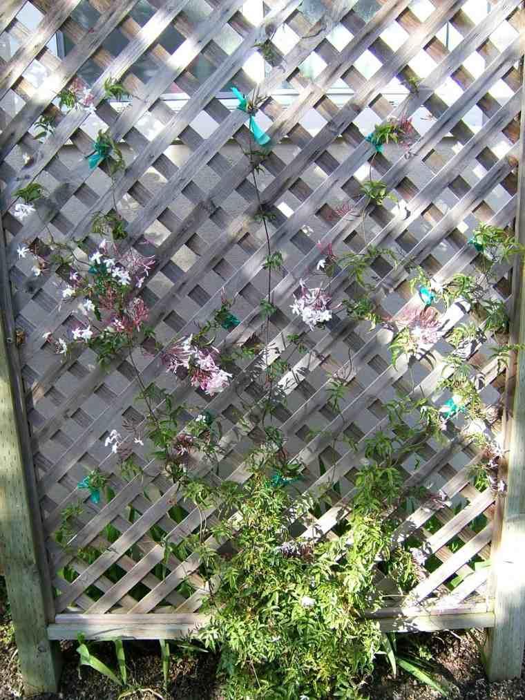 rejas madera plantas trepadoras pequenas jasmin