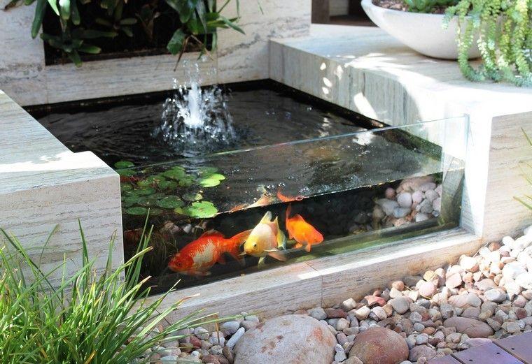 rocas estanque peces colores transparente