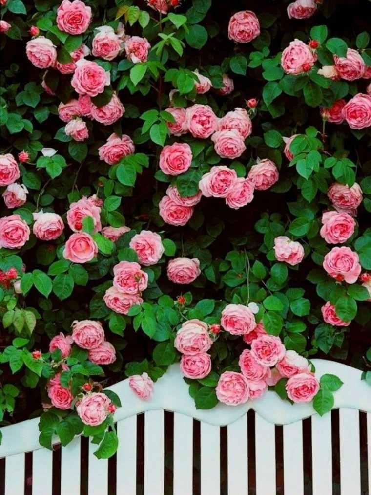Flores bonitas que no deben faltar en el jard n for Imagenes bonitas para decorar