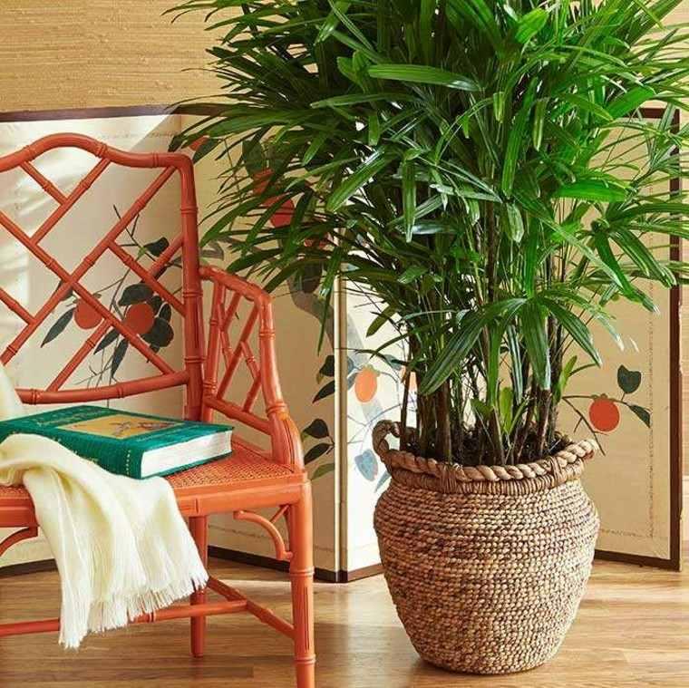 Decoraci n de interiores con plantas reg late bienestar - Plantas grandes para interiores ...