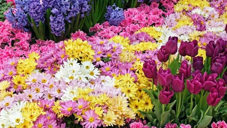 tulipanes margaritas mezcla flores ideas jardin