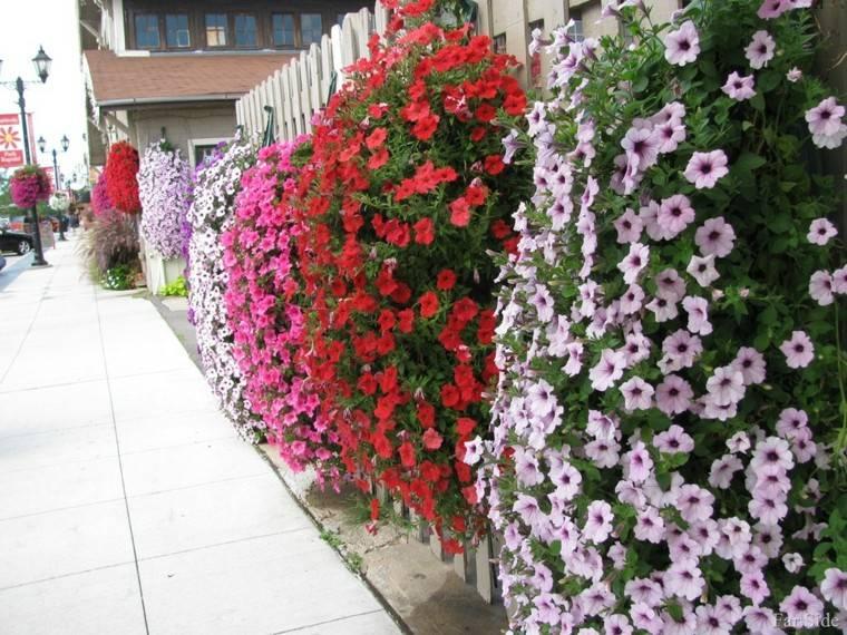 valla blanca flores colores cuelgan ideas modernas