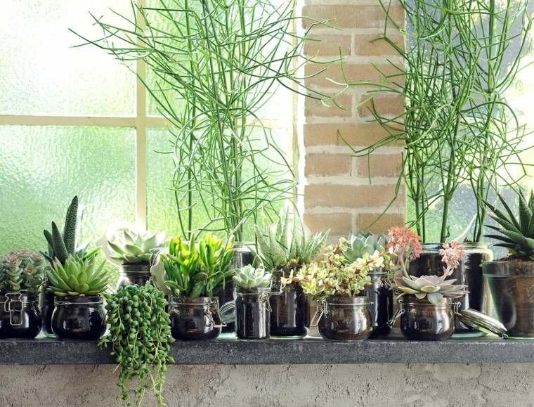 ventana suculentas vidrio plantas luz