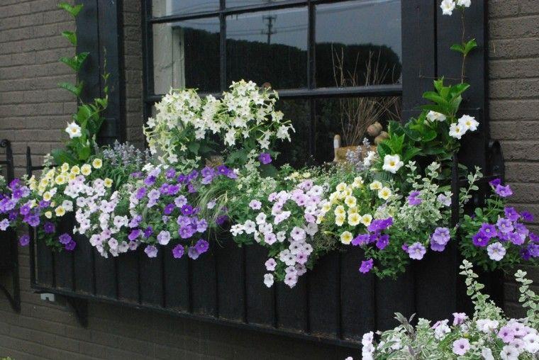 ventanas jardin plantas flores bonitas ideas