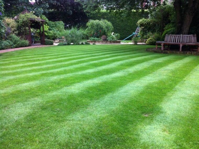 cesped jardin bandas verdes hierba