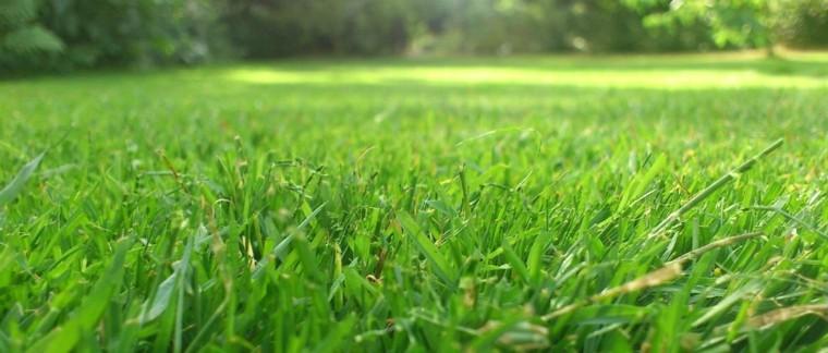 cesped jardin color verde cerca