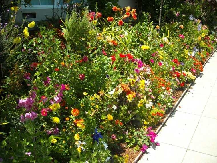 color contraste plantas jardin colorido