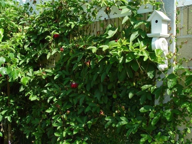 cuidado temporada plantas blanco descuidado