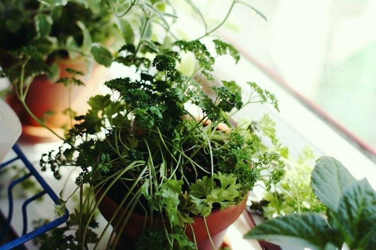 cultivar macetas especias casa interior