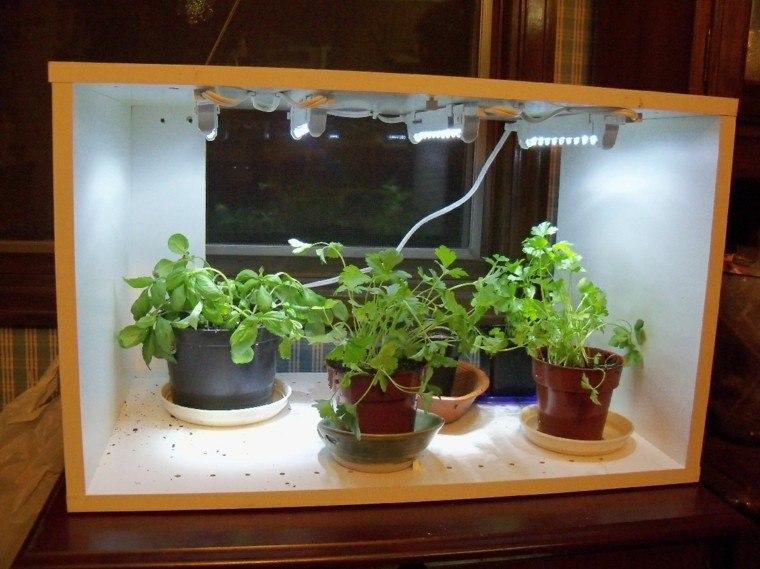 cultivo especias jardin casa acuario