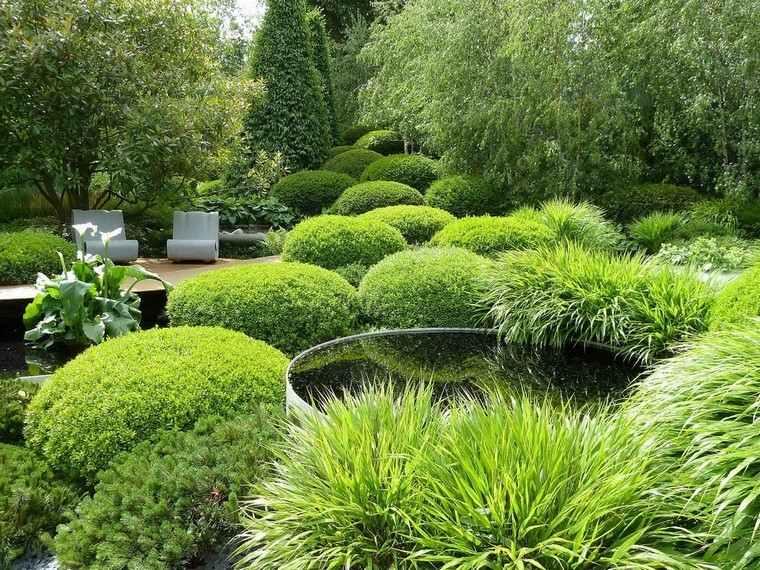 estanque jardin copioso verde plantas